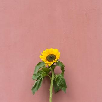 Maravilhosa flor amarela fresca com folhas verdes