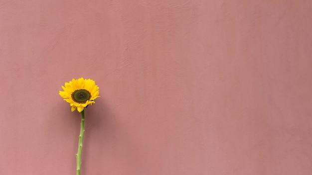 Maravilhosa flor amarela fresca