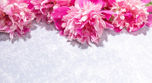 Maravilhosas delicadas peônias rosa deitado em cima do pano de fundo cinza texturizado close-up. dia dos namorados, dia das mães, mensal da mulher, dia internacional da mulher, cartão floral do casamento. copie o espaço.