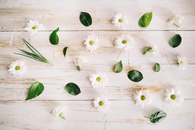 Maravilhosas margaridas e folhas em composição