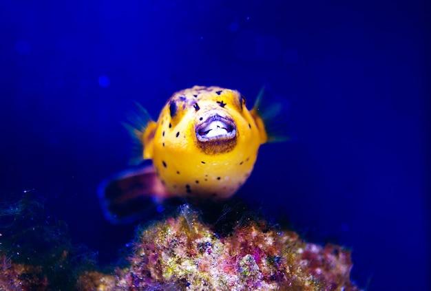Maravilhoso e belo mundo subaquático com corais e peixes tropicais