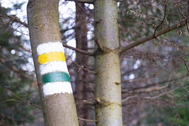 Marcando a rota turística pintada na árvore de sinal de rota de viagem Foto Premium