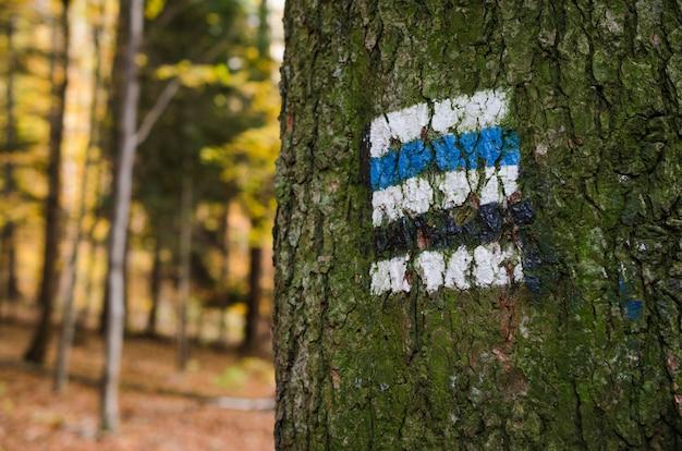 Marcando a rota turística pintada na árvore.