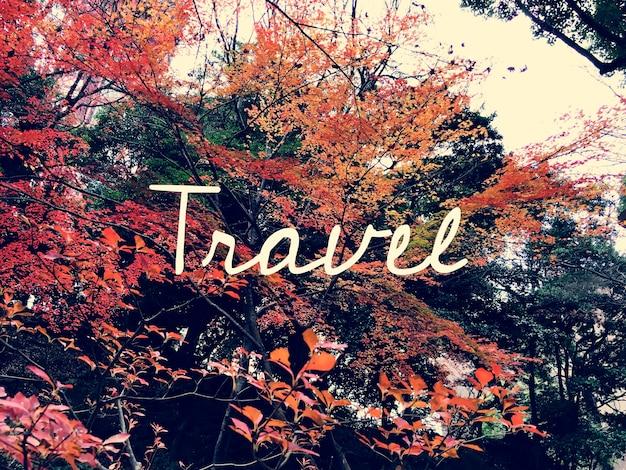 Marco de outono folha japão com palavra de viagem