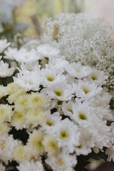 Margarida branca do gerbera e caspia branca