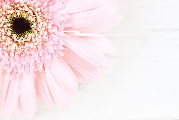 Margarida de gerbera flor rosa suave no fundo da mesa branca