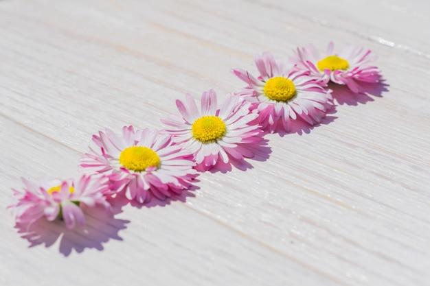 Margarida-de-rosa flores sobre fundo de mesa de madeira com espaço de cópia