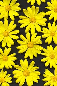 Margaridas amarelas. flores, vista superior