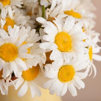 Margaridas brancas em um vaso com gotas de água de perto