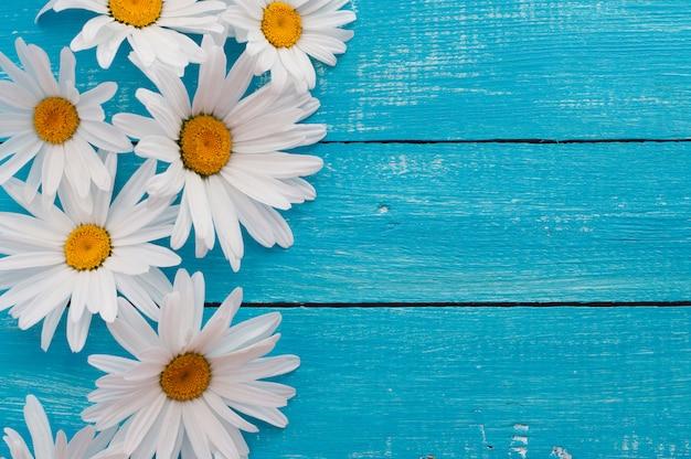 Margaridas brancas em uma superfície de madeira azul