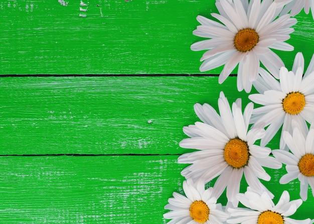 Margaridas brancas em uma superfície de madeira verde