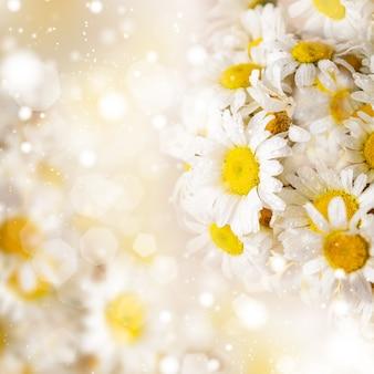 Margaridas brancas sobre fundo desfocado para design de primavera