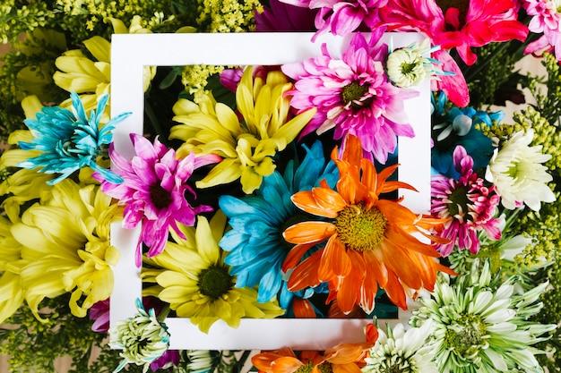 Margaridas coloridas de vista superior com frame