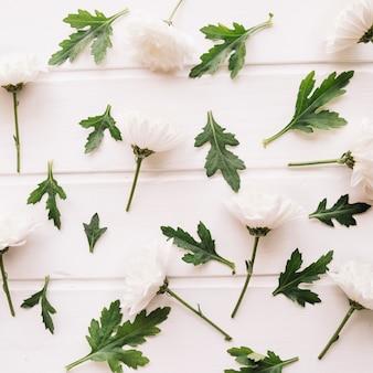 Margaridas compostas e folhas verdes