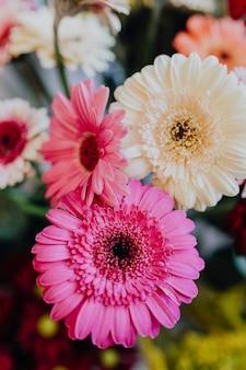 Margaridas de gerbera rosa e brancas