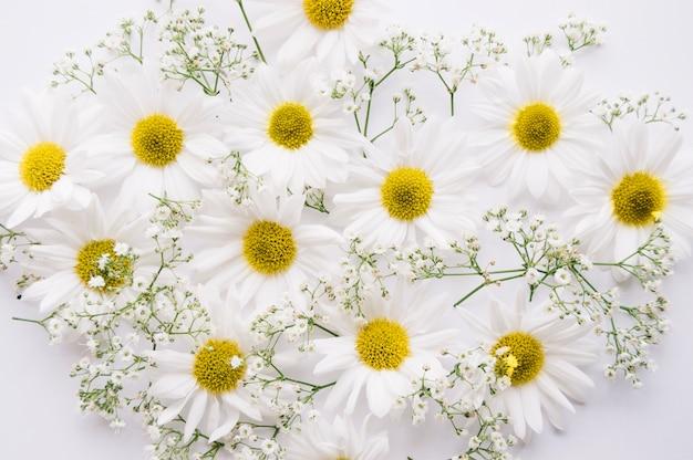 Margaridas e flores da respiração do bebê misturadas sobre um fundo branco