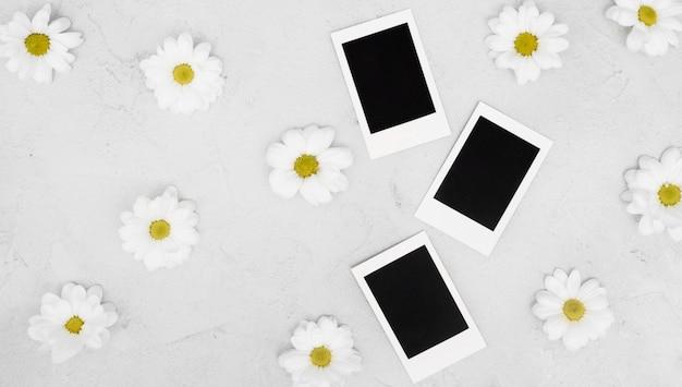Margaridas e fotos em branco polaroid em branco