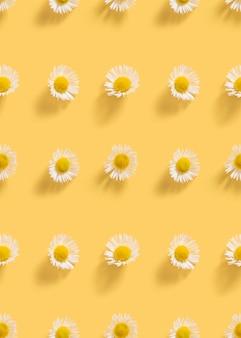 Margaridas frescas, brancas sobre fundo amarelo