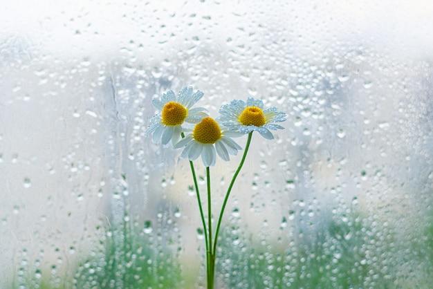 Margaridas pequenas na janela closeup