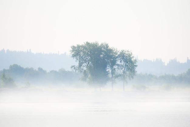 Margem de rio selvagem com árvores e arbustos na neblina matinal