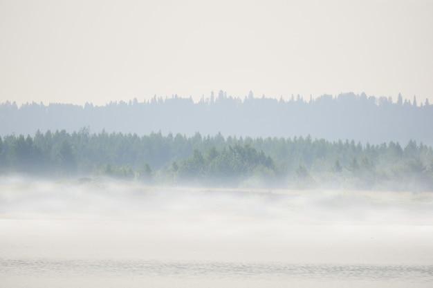 Margem de rio selvagem com prados e árvores na neblina matinal