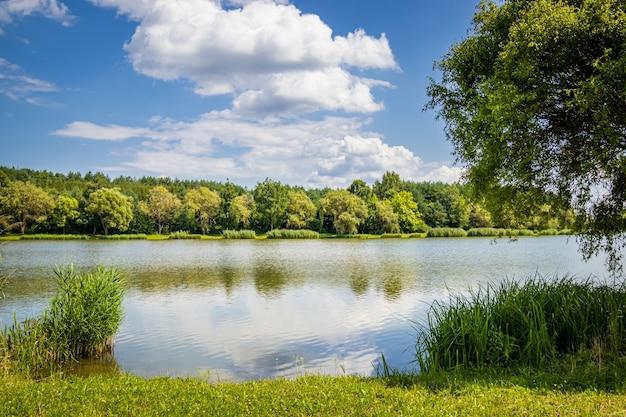Margem de um pequeno lago no verão na hungria