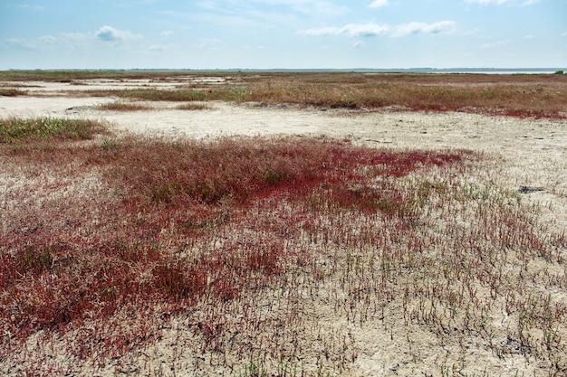 Margem do lago ebeyty com cobertura de grama vermelha