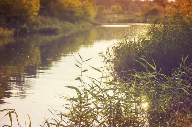 Margem do rio em dia ensolarado de verão