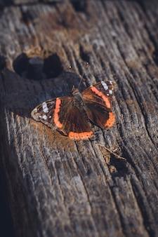 Mariposa de color marron y naranja encima de una madera vieja