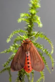 Mariposa marrom empoleirada em planta verde