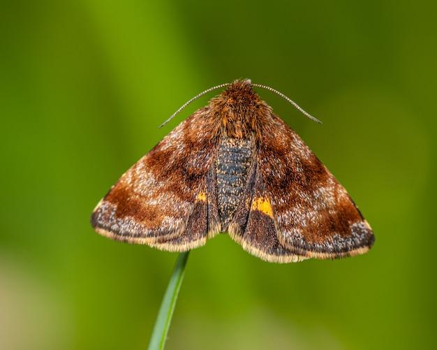Mariposa marrom na ponta da grama