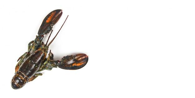 Marisco de lagosta fresca no restaurante de frutos do mar para alimentos cozidos / lagosta crua, isolada no fundo branco