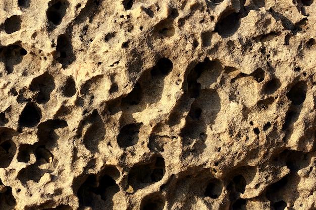 Marrom da superfície da pedra do fundo poroso com macro da rocha do shell de furos. profundidade total de campo.