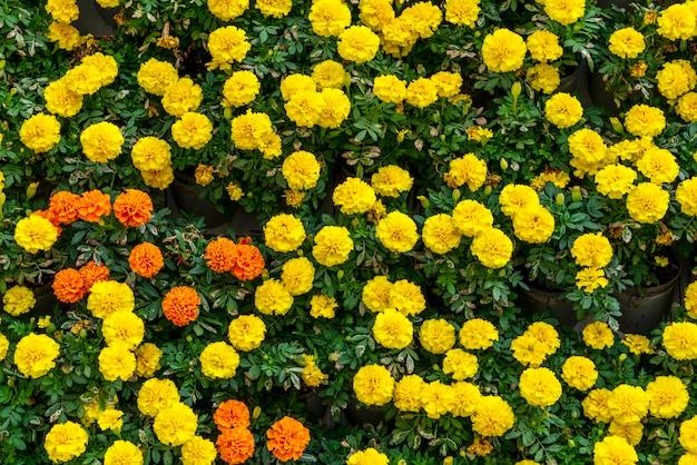 Material de fundo de parede de flores e plantas