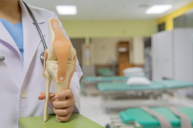 Médica detém o modelo de joelho. com espaço para texto