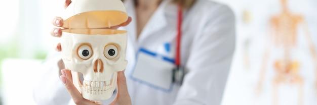 Médica segurando um modelo de plástico de um crânio humano em suas mãos, close-up