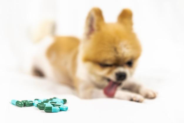 Medicina veterinária, animal de estimação, animais