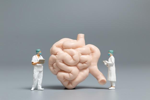 Médico e enfermeira em miniatura observando e discutindo sobre o intestino delgado humano, ciência e concepção médica