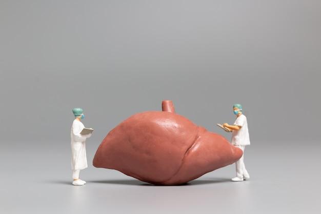 Médico e enfermeiro em miniatura observando e discutindo sobre o fígado humano, a ciência e a concepção médica