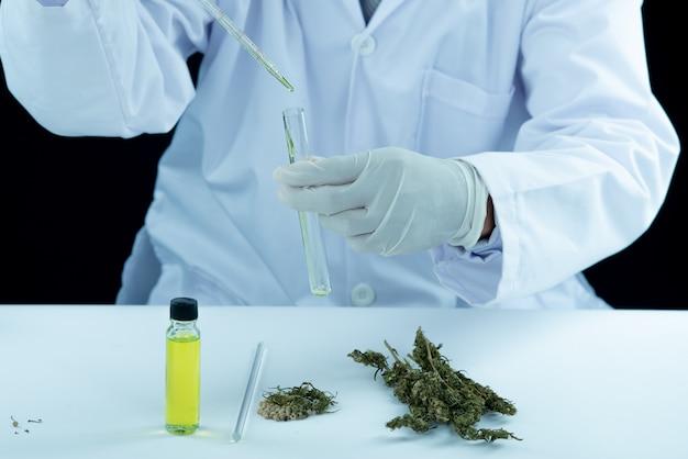 Médico mão segure e ofereça ao paciente maconha medicinal e óleo.