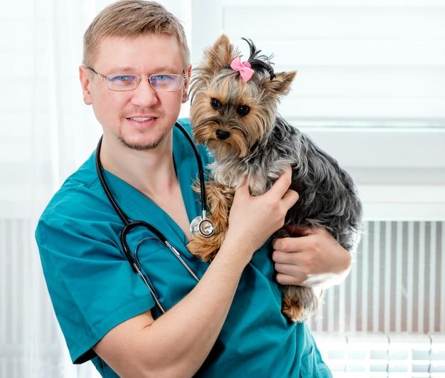 Médico masculino bonito veterinário na clínica está segurando o cachorro yorkshire terrier nas mãos e sorrindo