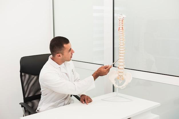 Médico masculino mostrando ossos da coluna vertebral