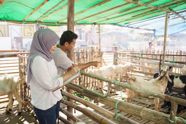 Médico veterinário muçulmano examina a cabra em fazenda tradicional