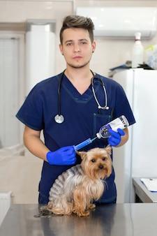 Médico veterinário profissional vacina um cão pequeno da raça yorkshire terrier