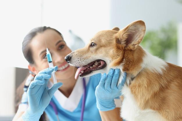 Médico veterinário segura uma seringa com agulha na frente do conceito de vacinação para cães e gatos