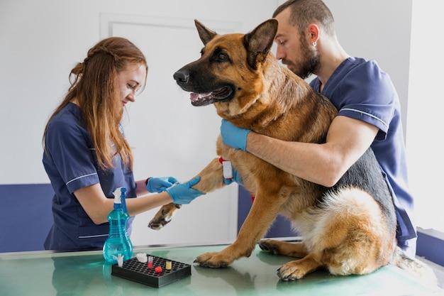 Médicos de tiro médio ajudando cachorro grande ficar bom