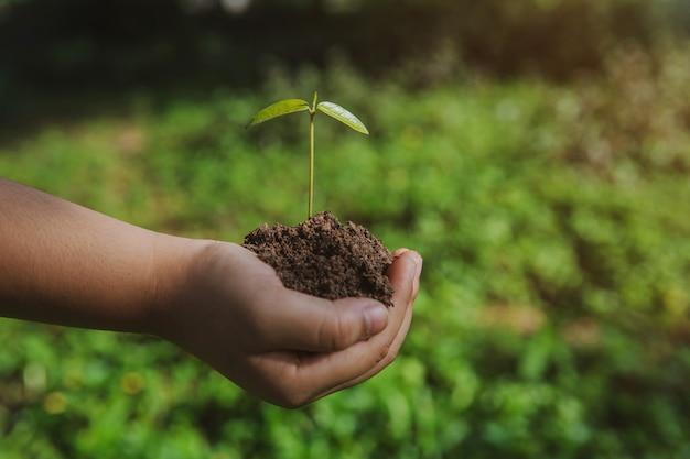 Meio ambiente dia da terra nas mãos de árvores que crescem mudas. bokeh verde fundo garoto