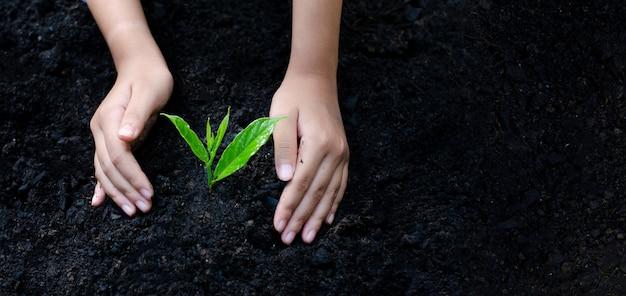 Meio ambiente dia da terra nas mãos de árvores que crescem mudas