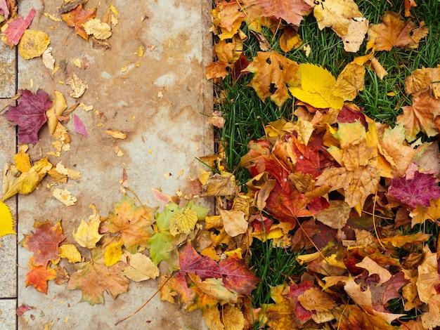 Meio quadro das folhas de outono de cor amarelo-avermelhado brilhante na grama verde meio quadro das folhas de outono
