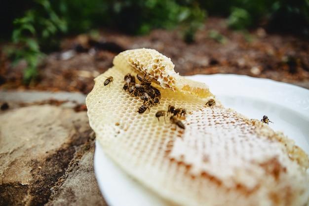 Mel, abelhas e cera em uma placa